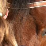 L'équithérapie : le cheval soignant
