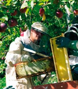 un apiculteur en pleine action