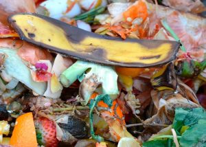 dechet-compost