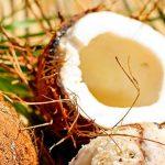 La noix de coco : bonne ou mauvaise pour la santé?